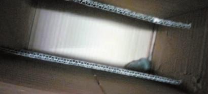 包装箱里有一只奄奄一息的小老鼠 网友供图